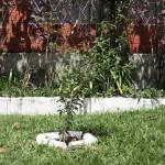 jardim23